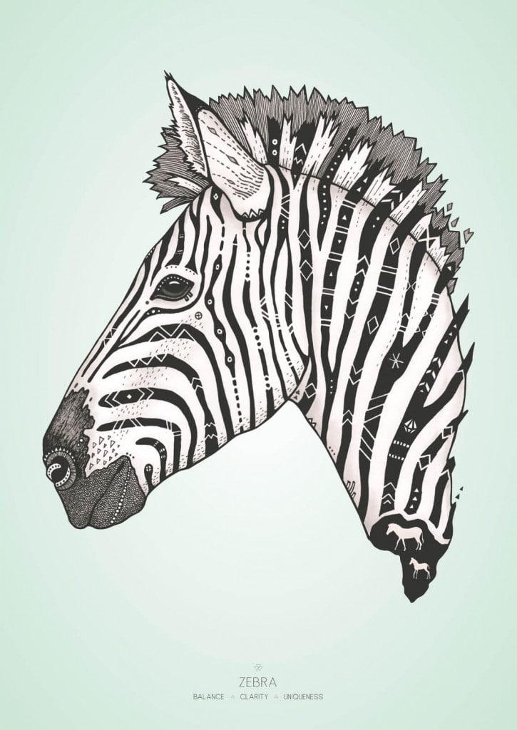 Zebra med farvet baggrund
